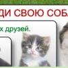 Дизайн шапки для сайта-картотеки потерянных животных.