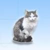 Дизайн шапки для сайта ветеринарной клиники.